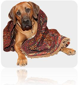 Dog wrapped in rug