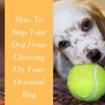 How To Stop Your Dog From Chewing On Your Oriental Rug