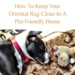 How To Keep Your Oriental Rug Clean In A Pet-Friendly Home