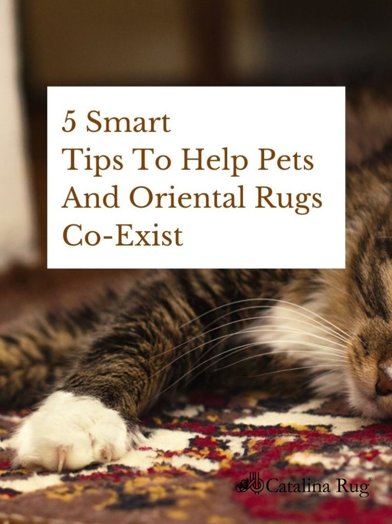 5 Smart Tips To Help Pets And Oriental Rugs Co-Exist